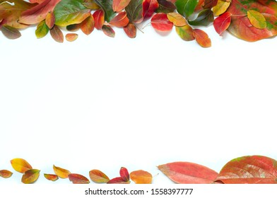 colored leaves on a white background