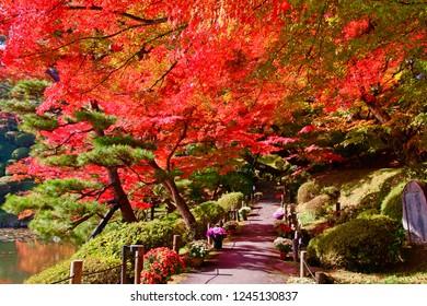 日本福島二本松市の「霞ヶ城公園」の紅葉。