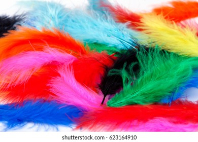 Colored, light bird feathers on white background