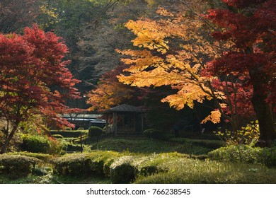 Colored maple trees in japanese autumn