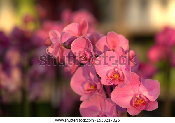 colored orchid flowers show their beauty