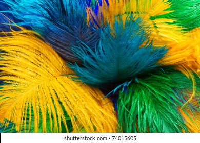 colored ostrich feather, background
