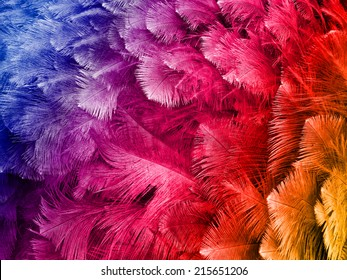 colored ostrich feathers background
