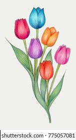 Colored pencils drawing of colorful Tulips.