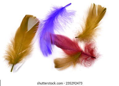 Colored quill feather on a white background