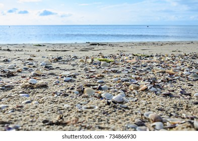 Colored sea shells standing in the golden beach sand near water, close up.