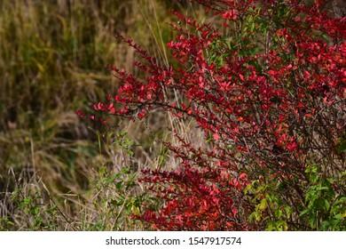 Colored shrub, Autumn, Vysočina, Chzechia