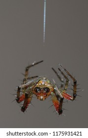 colored spider upside down