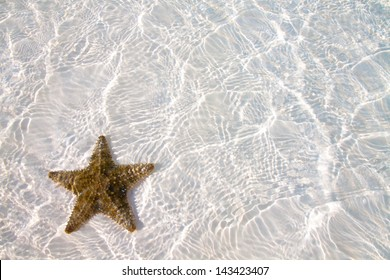 Colored Starfish on white sand and crystal water