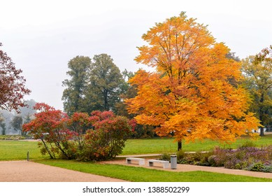 colored trees in autumnal park