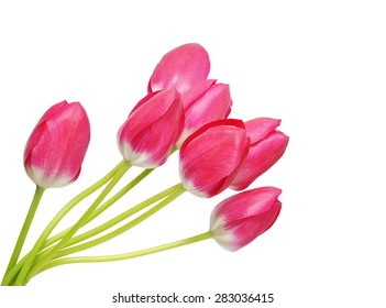 Colored Tulip Flowers Isolated on White Background. Macro. National Flower of The Netherlands, Turkey and Hungary