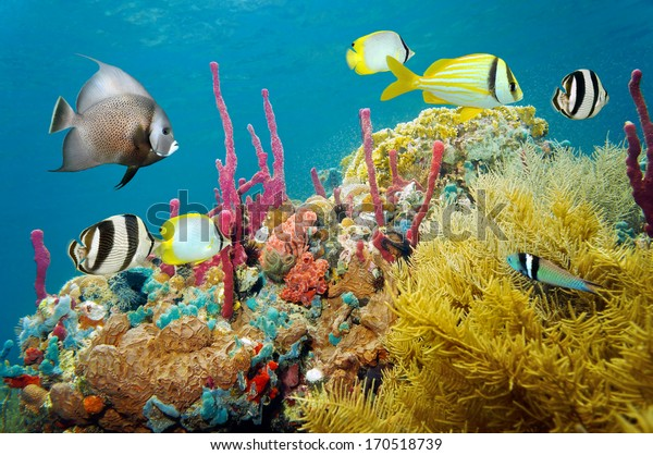 Colored underwater marine life in a coral reef with tropical fish, Caribbean sea
