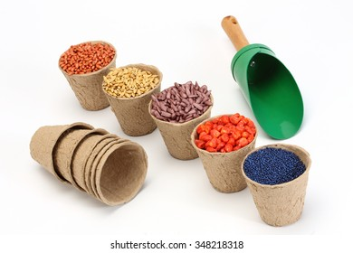colored various sowing seed in paper pot