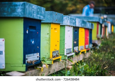 colored wooden beehives - honey bees flying around wooden beehives