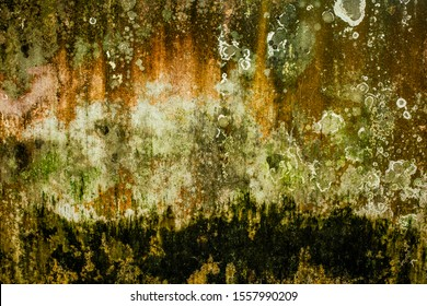 Colorful Algae in a white wall