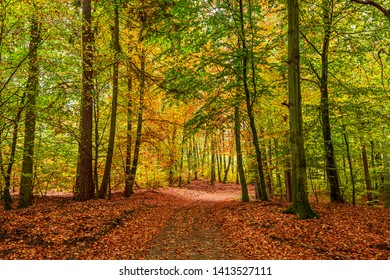 Colorful and amazing forest in the fall, Europe