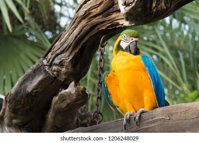 Colorful amazon bird stand on the tree. Portrait of amazon's parrot or colorful bird is looking for other parrots.