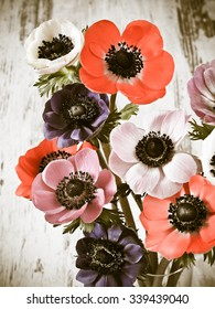 Colorful Anemone Flower