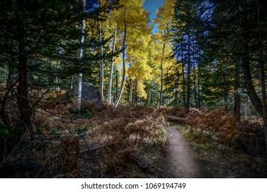 Colorful Arizona Kachina hiking trail among quaking aspen in autumn near Flagstaff.