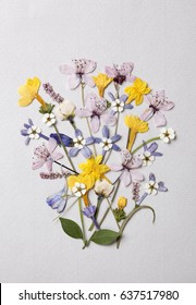 Colorful arrangement of pressed flowers