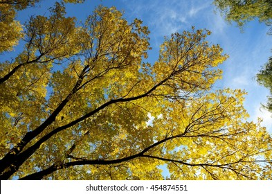 Colorful Ash Leaves on a Sunny Autumn Day
