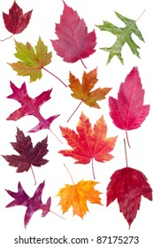 Colorful assortment of fall leaves isolated on white