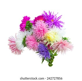 colorful asters on a white
