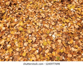 Colorful atumn leaves field wallpaper