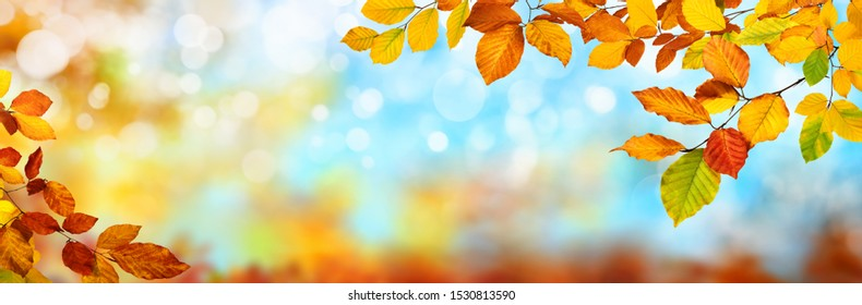 Colorful autumn background in panoramic format, with red, yellow and green leaves framing a blue bokeh background