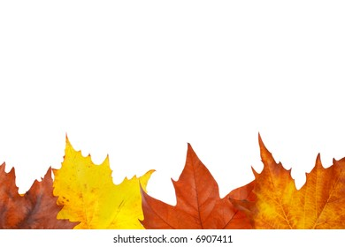 Colorful autumn border made from leaves, isolated on white background. Space for text