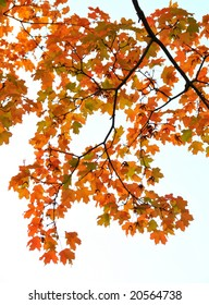 Colorful autumn branch pattern