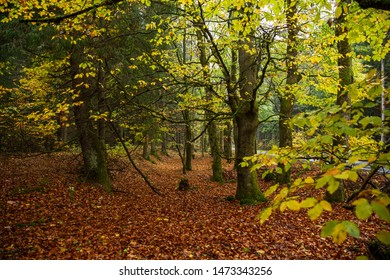 Colorful autumn colors of the forest and Leaves on the forest floor, the Harz national Park