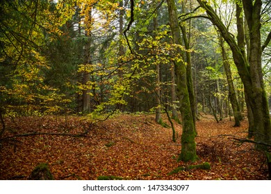 Colorful autumn colors in the mixed forest and Deciduous forest soil, Harz national Park