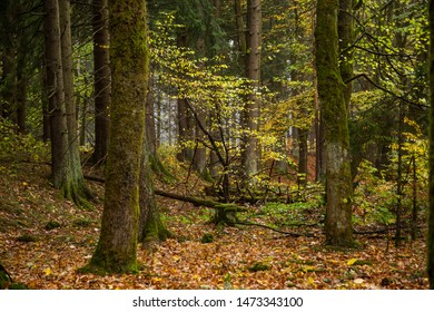 Colorful autumn colors in the mixed forest, the Harz national Park