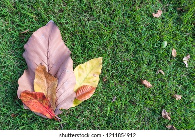 colorful autumn dry leaves on green grass texture background