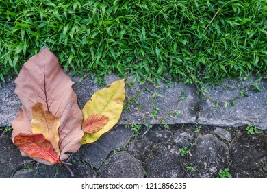 colorful autumn dry leaves on cement pathway and green grass texture background