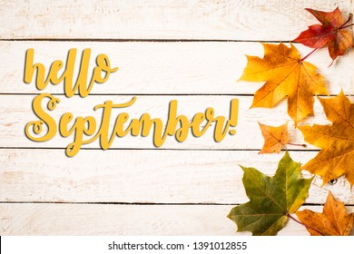 Colorful autumn dry leaves on white rustic wood blanks background. Empty space for copy, text, lettering. Autumn maple leaves background. Top view