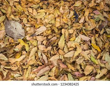 Colorful autumn fallen leaves.
