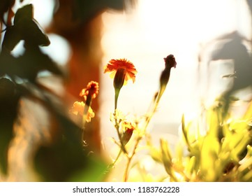 colorful autumn flowers on the sun in the old summerhouse. Fall blurred background.