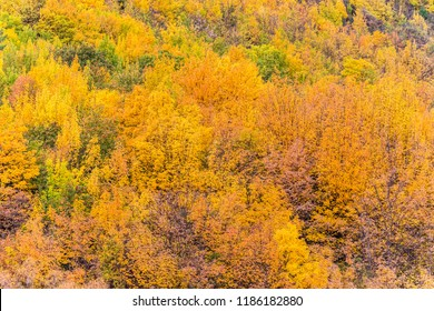 Colorful autumn foliage and green pine trees in Arrowtown, Central Otago, South Island, New Zealand.