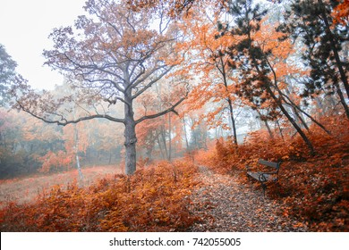 colorful autumn forest background