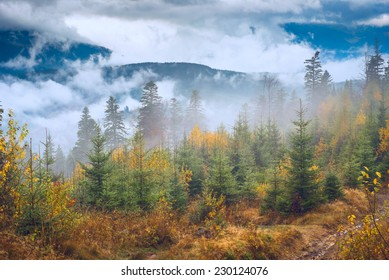 Colorful autumn forest in a Carpathian misty valley