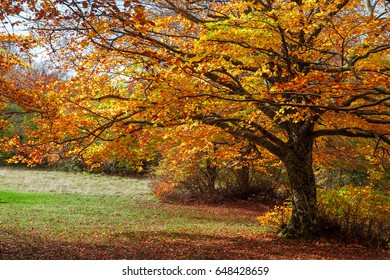 Colorful autumn in the forest of the Monti San Vicino and Canfaito park, Italy