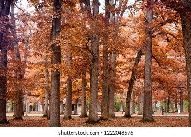 Colorful autumn forest preserves in Glenwood Illinois.