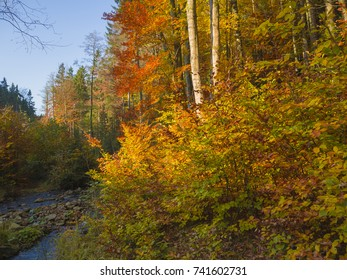 colorful autumn forest with stream creek  stones moss ferns and fallen leaves and orange trees in luzicke hory mountain in czech republic