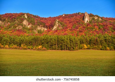 Colorful autumn forest under blue sky