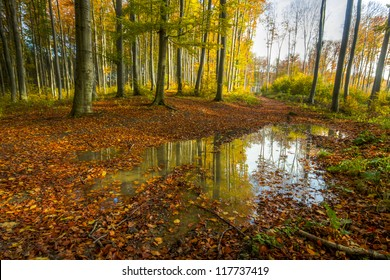 colorful autumn forest-his photo made by hdr technic
