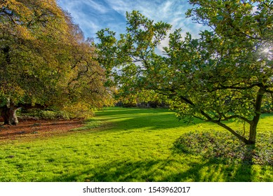 colorful autumn and garden decoration