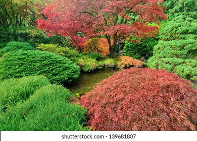colorful autumn japanese maples in national historical site Butchart Gardens, Vancouver island, British Columbia, Canada