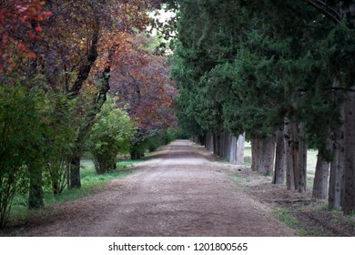 Colorful autumn landscape with cypresses, fruit trees and path